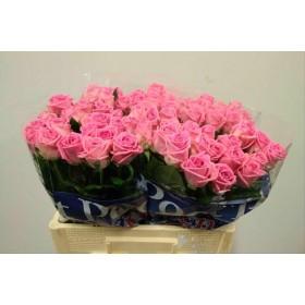 FLOR, ROSA HO. AQUA 60cm, paq.X20 rosa fort