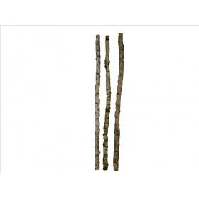 Deco berk stam 8/10,cm. (precio por tronco)