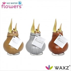 AMARYLLIS CERA TOUCH OF WAX OR / PLATA / BRONZE
