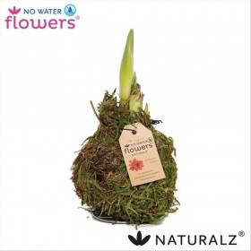 AMARYLLIS CERA TOUCH OF WAX BOLA MUSGPO NATURAL