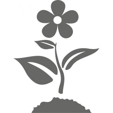 Planta Temporada y Flor