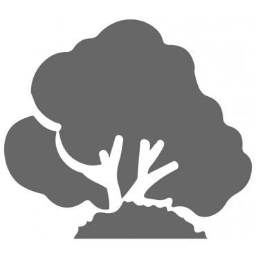 Planta Arbustiva