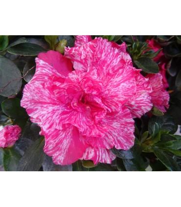 Otras Plantas en Flor