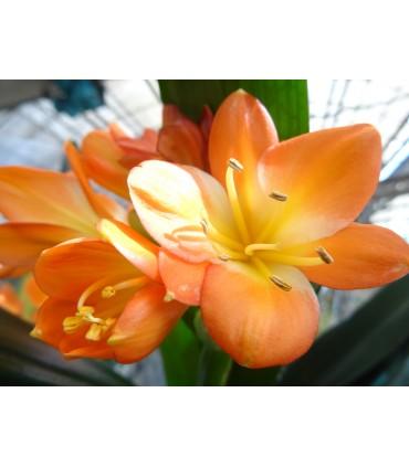 Ver Todas las plantas en Flor