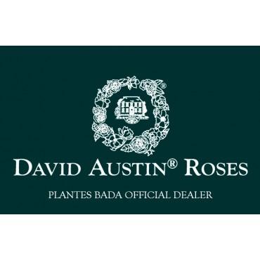 ROSALES DAVID AUSTIN