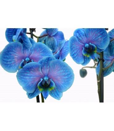 Ver Todas las Orquideas