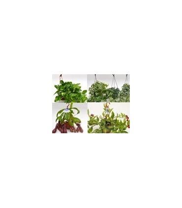 Ver Todas las Plantas de Colgar