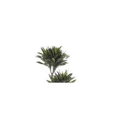 Otras Plantas Grandes