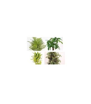 Ver Todas las Plantas Grandes
